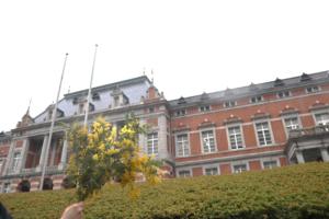 flower demo
